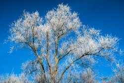 free photos Winter Baum